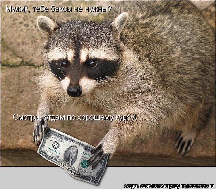 Котоматрица: Мужик, тебе баксы не нужны? Смотри, отдам по хорошему курсу!