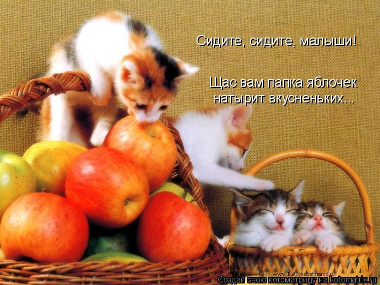 Котоматрица: Щас вам папка яблочек  натырит вкусненьких... Сидите, сидите, малыши!