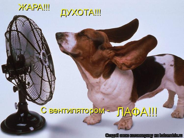 Котоматрица: ЖАРА!!!  ДУХОТА!!! С вентилятором -  ЛАФА!!!