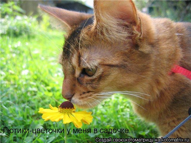 Котоматрица: Лютики-цветочки у меня в садочке...