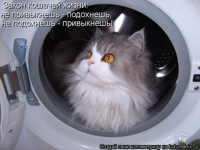Котоматрица: Закон кошачей жизни: не привыкнешь - подохнешь, не подохнешь - привыкнешь!
