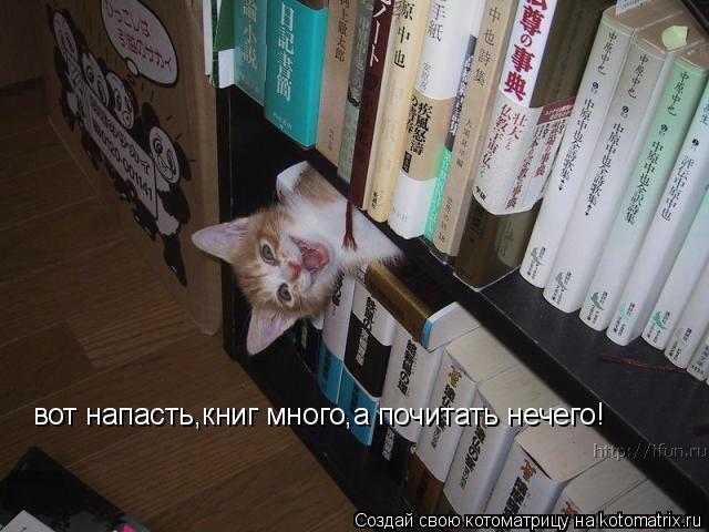 Котоматрица: вот напасть,книг много,а почитать нечего!