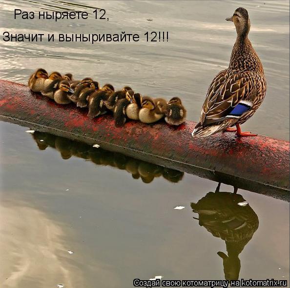 Котоматрица: Раз ныряете 12, Значит и выныривайте 12!!!
