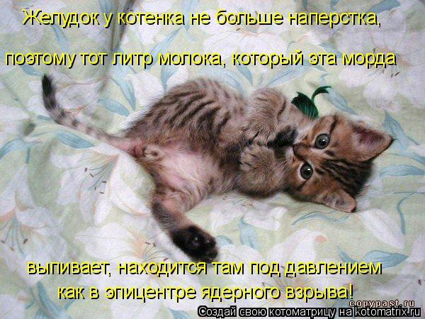 Котоматрица: Желудок у котенка не больше наперстка, поэтому тот литр молока, который эта морда выпивает, находится там под давлением как в эпицентре яде