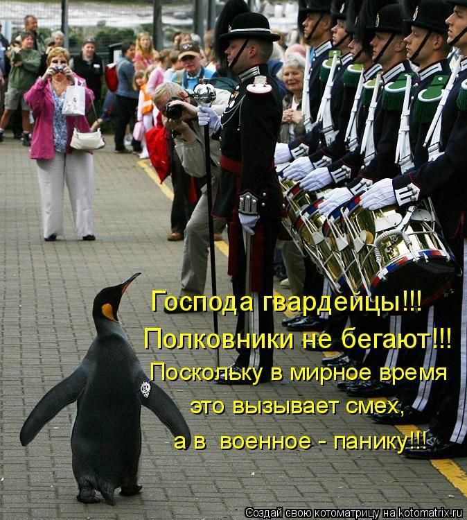 Котоматрица: Господа гвардейцы!!! Полковники не бегают!!!  Поскольку в мирное время это вызывает смех, а в  военное - панику!!!