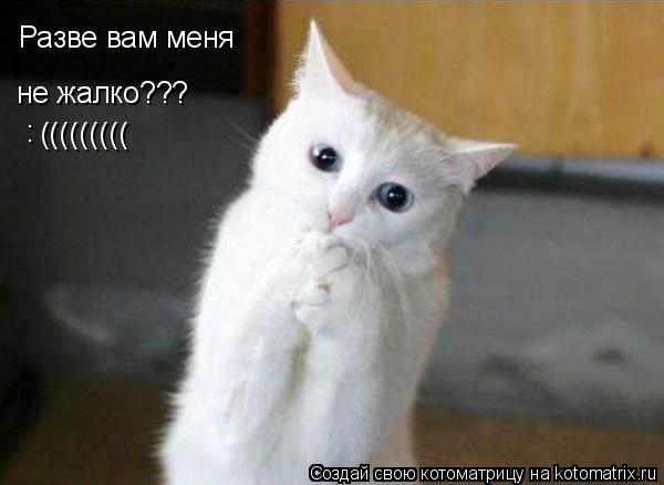Котоматрица: Разве вам меня не жалко??? ((((((((( :