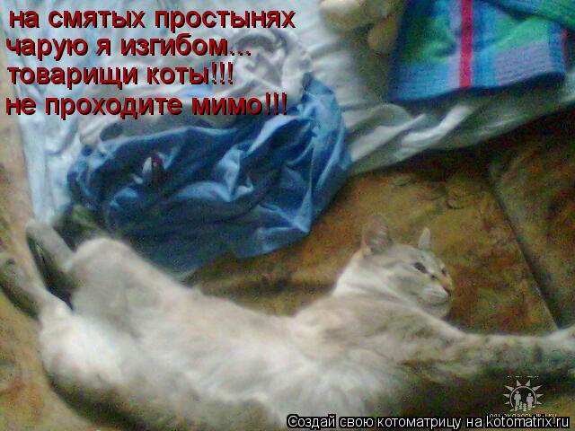 Котоматрица: на смятых простынях чарую я изгибом... товарищи коты!!! не проходите мимо!!!