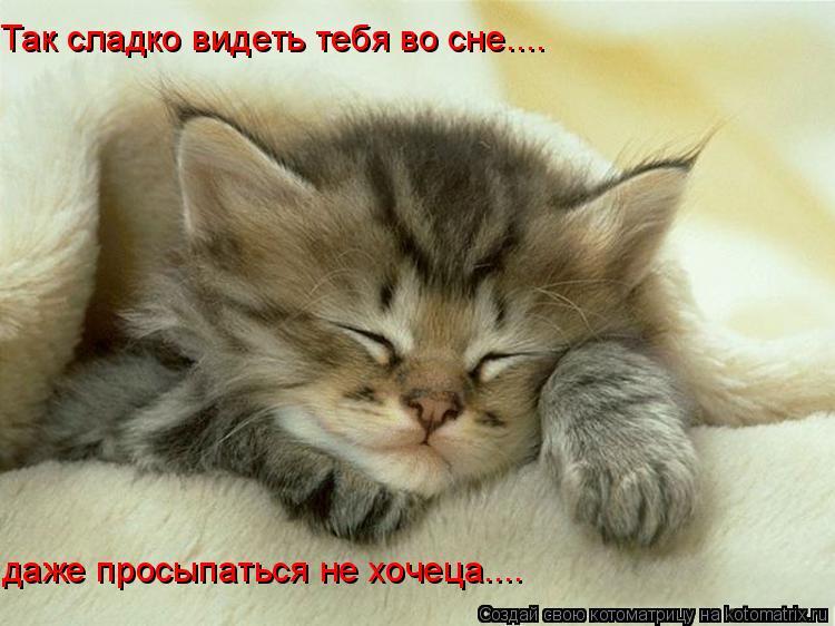Котоматрица: Так сладко видеть тебя во сне.... даже просыпаться не хочеца....