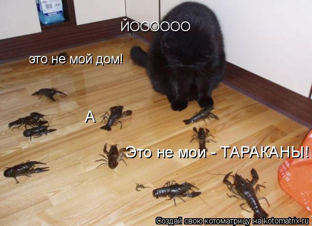 Котоматрица: это не мой дом! ЙОООООО Это не мои - ТАРАКАНЫ! А