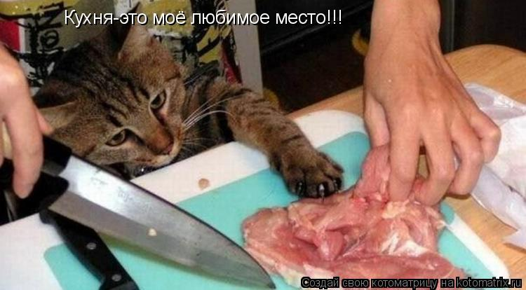 Котоматрица: Кухня-это моё любимое место!!!