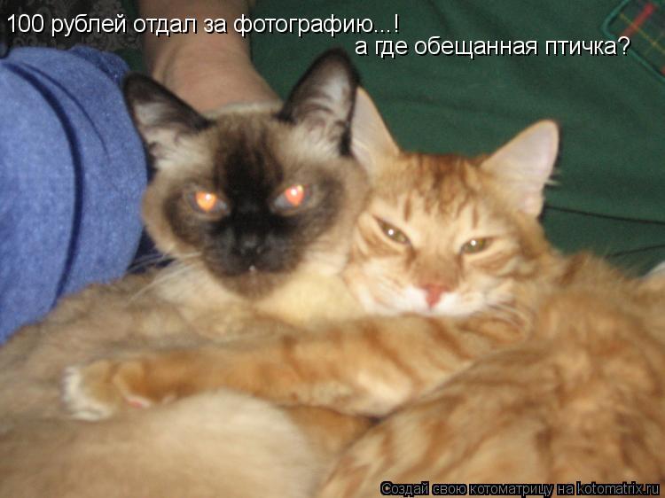Котоматрица: 100 рублей отдал за фотографию...! а где обещанная птичка?
