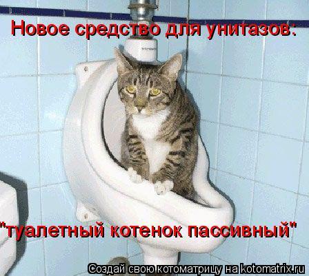 """Котоматрица: Новое средство для унитазов: """"туалетный котенок пассивный"""""""