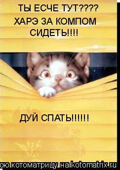 Котоматрица: ТЫ ЕСЧЕ ТУТ???? ХАРЭ ЗА КОМПОМ СИДЕТЬ!!!! ДУЙ СПАТЬ!!!!!!
