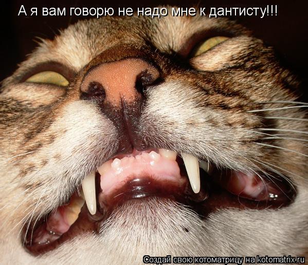 Котоматрица: А я вам говорю не надо мне к дантисту!!!