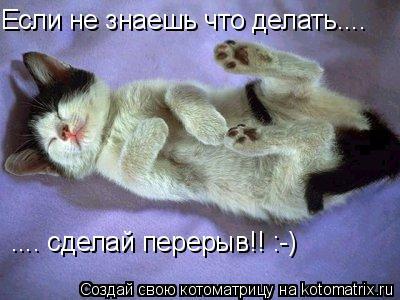 Котоматрица: Если не знаешь что делать.... .... сделай перерыв!! :-)