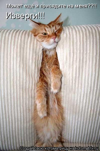 Котоматрица: Может ещё и присядите на меня??!! Изверги!!!