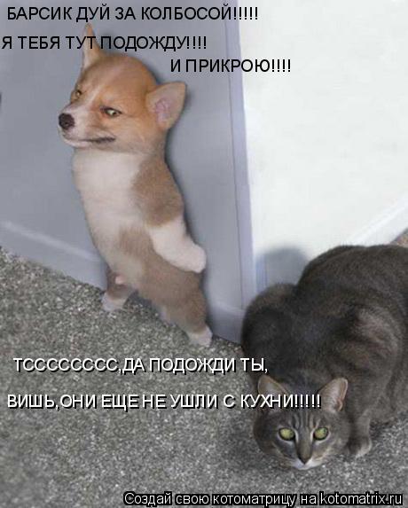 Котоматрица: БАРСИК ДУЙ ЗА КОЛБОСОЙ!!!!! Я ТЕБЯ ТУТ ПОДОЖДУ!!!! И ПРИКРОЮ!!!! ТСССССССС,ДА ПОДОЖДИ ТЫ, ВИШЬ,ОНИ ЕЩЕ НЕ УШЛИ С КУХНИ!!!!!