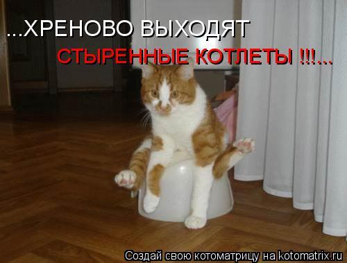 Котоматрица: ...ХРЕНОВО ВЫХОДЯТ СТЫРЕННЫЕ КОТЛЕТЫ !!!...