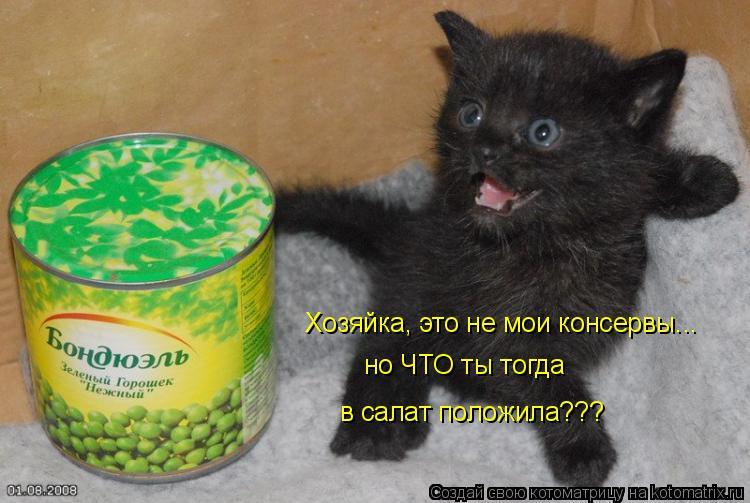 Котоматрица: Хозяйка, это не мои консервы... но ЧТО ты тогда  в салат положила???