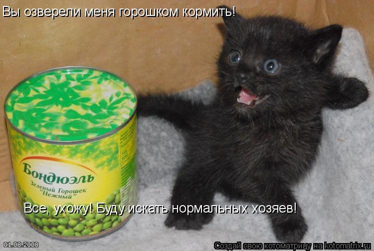 Котоматрица: Вы озверели меня горошком кормить! Все, ухожу! Буду искать нормальных хозяев!