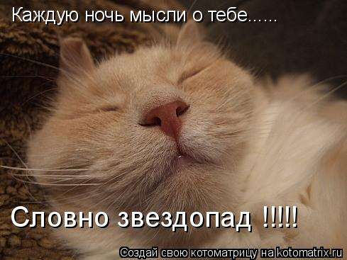 Котоматрица: Каждую ночь мысли о тебе...... Словно звездопад !!!!!