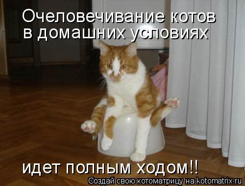 Котоматрица: Очеловечивание котов в домашних условиях идет полным ходом!!
