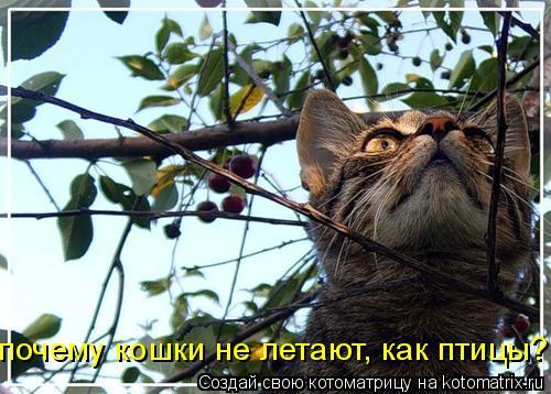 Котоматрица: почему кошки не летают, как птицы?...