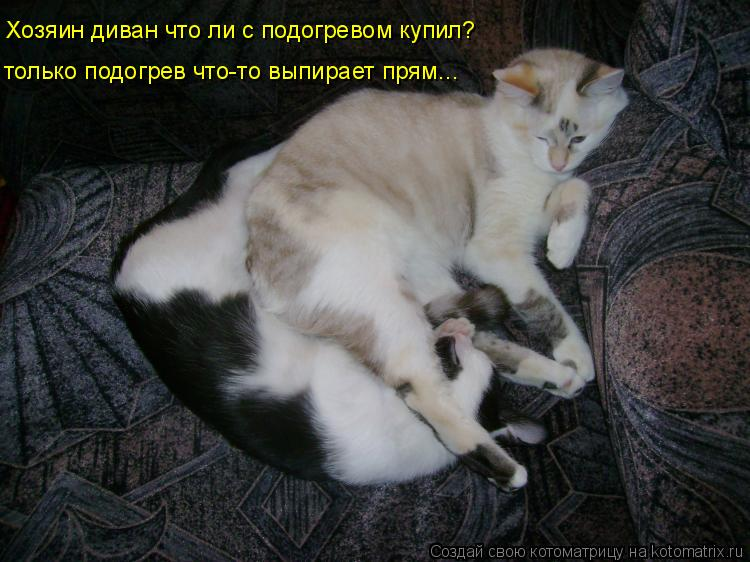 Котоматрица: Хозяин диван что ли с подогревом купил? только подогрев что-то выпирает прям...