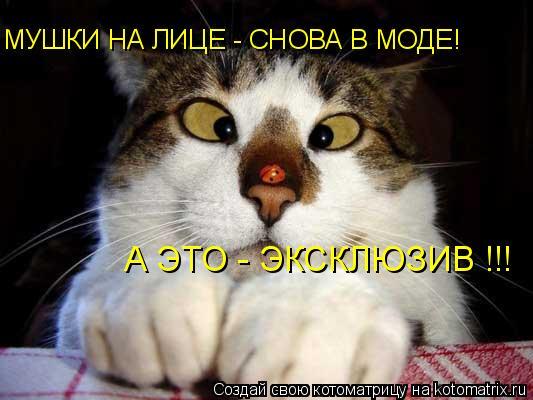 Котоматрица: МУШКИ НА ЛИЦЕ - СНОВА В МОДЕ! А ЭТО - ЭКСКЛЮЗИВ !!!