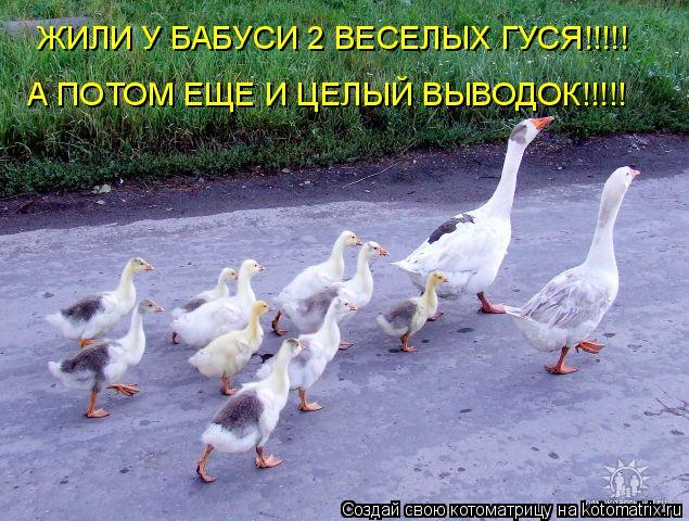 Котоматрица: А ПОТОМ ЕЩЕ И ЦЕЛЫЙ ВЫВОДОК!!!!! ЖИЛИ У БАБУСИ 2 ВЕСЕЛЫХ ГУСЯ!!!!!