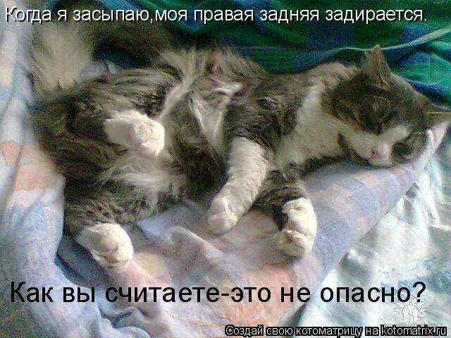 Котоматрица: Когда я засыпаю,моя правая задняя задирается. Как вы считаете-это не опасно?