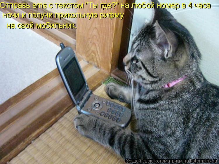 """Котоматрица: Отправь sms с текстом """"Ты где?"""" на любой номер в 4 часа   ночи и получи прикольную рифму  на свой мобильник."""