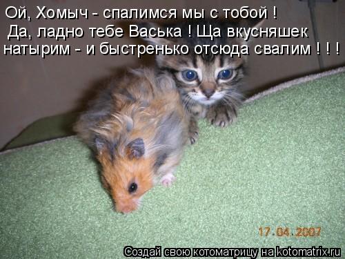 Котоматрица: Ой, Хомыч - спалимся мы с тобой ! Да, ладно тебе Васька ! Ща вкусняшек натырим - и быстренько отсюда свалим ! ! !