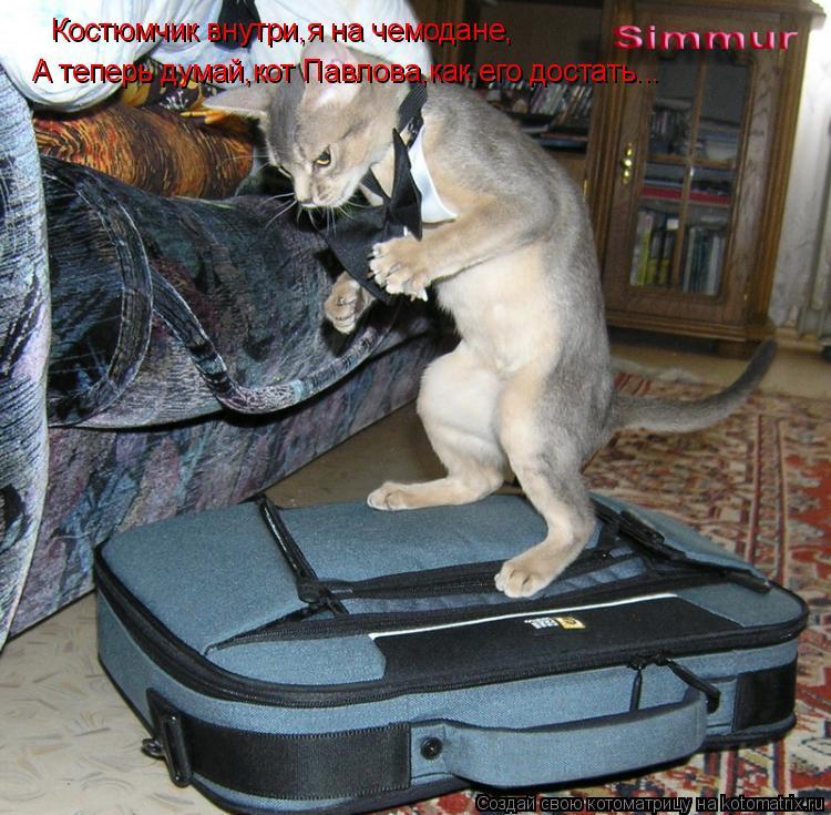 Котоматрица: Костюмчик внутри,я на чемодане, А теперь думай,кот Павлова,как его достать...