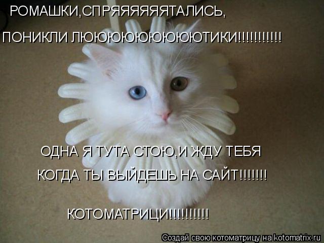 Котоматрица: РОМАШКИ,СПРЯЯЯЯЯЯТАЛИСЬ, ПОНИКЛИ ЛЮЮЮЮЮЮЮЮЮТИКИ!!!!!!!!!!! ОДНА Я ТУТА СТОЮ,И ЖДУ ТЕБЯ КОГДА ТЫ ВЫЙДЕШЬ НА САЙТ!!!!!!! КОТОМАТРИЦИ!!!!!!!!!!