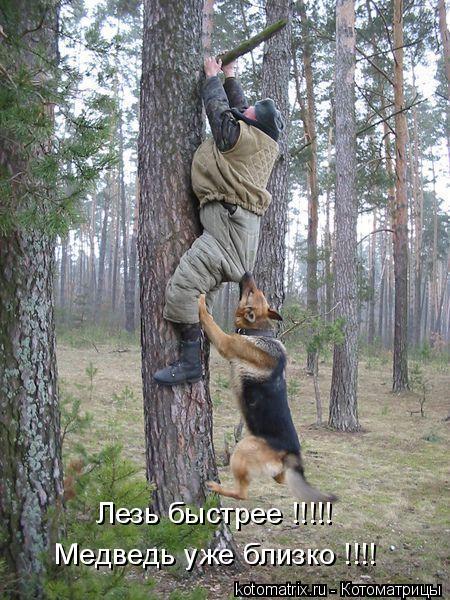 Котоматрица: Лезь быстрее !!!!!  Медведь уже близко !!!!