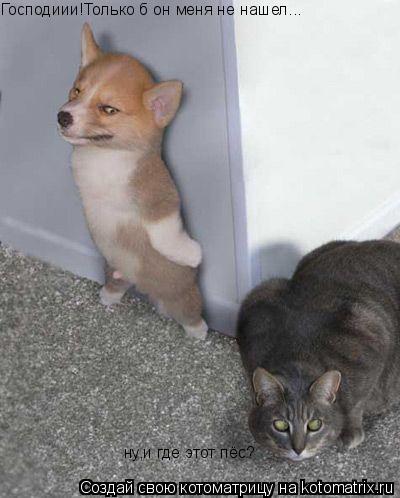 Котоматрица: Господиии!Только б он меня не нашел... ну,и где этот пёс?