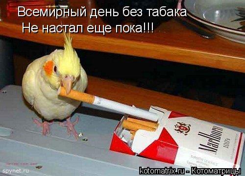 Котоматрица: Всемирный день без табака Не настал еще пока!!!