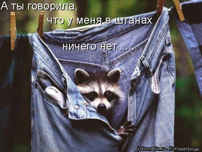 Котоматрица: А ты говорила,  что у меня в штанах ничего нет.......