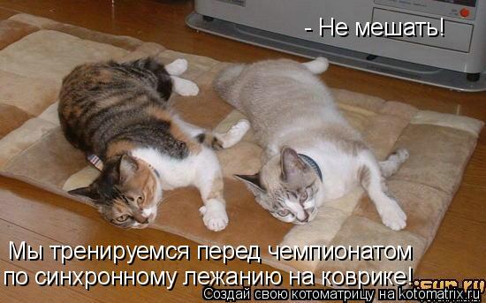 Котоматрица: - Не мешать! Мы тренируемся перед чемпионатом по синхронному лежанию на коврике!