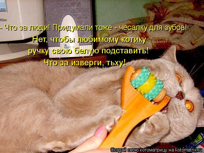 Котоматрица: - Что за люди! Придумали тоже - чесалку для зубов! Нет, чтобы любимому котику  ручку свою белую подставить! Что за изверги, тьху!