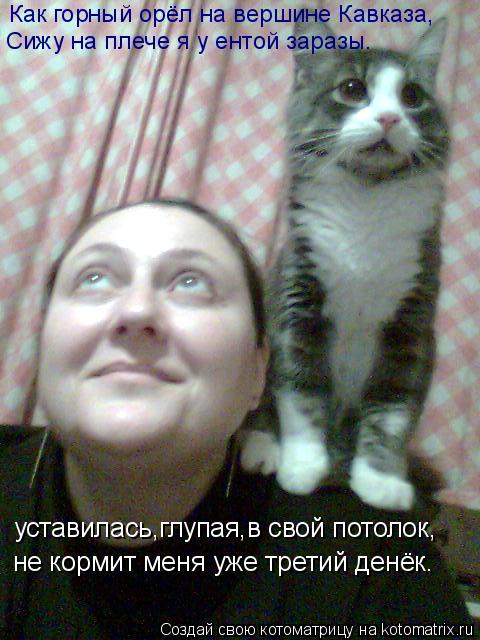 Котоматрица: уставилась,глупая,в свой потолок, не кормит меня уже третий денёк. Как горный орёл на вершине Кавказа, Сижу на плече я у ентой заразы.
