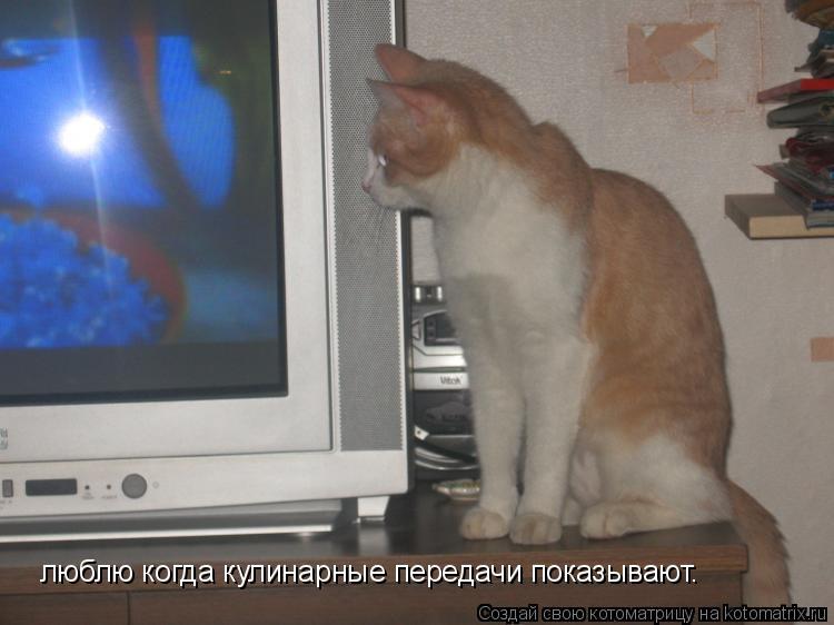 Котоматрица: люблю когда кулинарные передачи показывают.