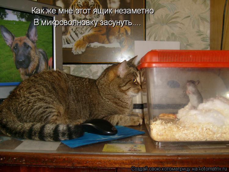 Котоматрица: Как же мне этот ящик незаметно В микроволновку засунуть....
