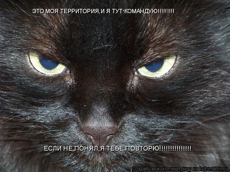 Котоматрица: ЭТО МОЯ ТЕРРИТОРИЯ,И Я ТУТ КОМАНДУЮ!!!!!!!!! ЕСЛИ НЕ ПОНЯЛ,Я ТЕБЕ ПОВТОРЮ!!!!!!!!!!!!!!!