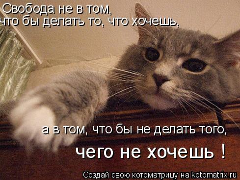 Котоматрица: Свобода не в том,  что бы делать то, что хочешь,  а в том, что бы не делать того,  чего не хочешь !
