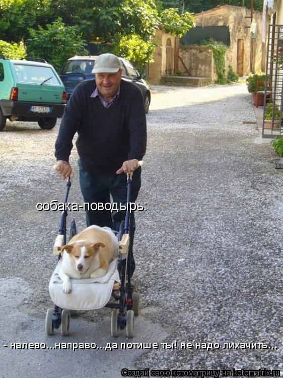 Котоматрица: собака-поводырь:  - налево...направо...да потише ты! не надо лихачить...