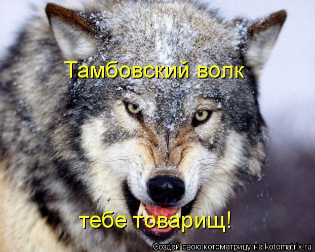 Котоматрица: Тамбовский волк тебе товарищ!