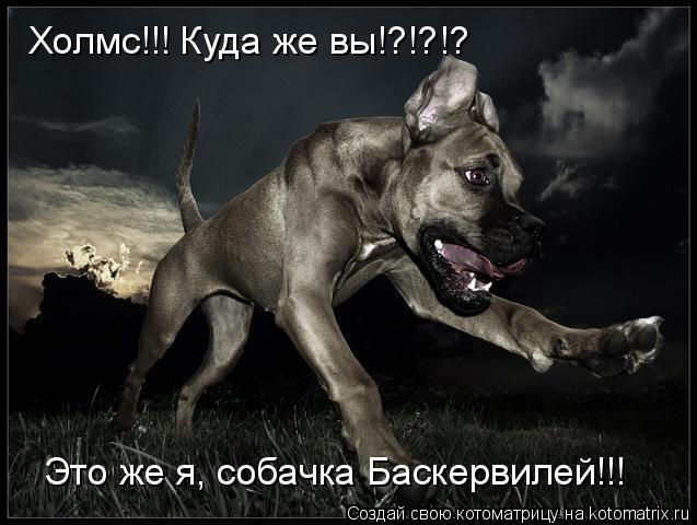 Котоматрица: Холмс!!! Куда же вы!?!?!? Это же я, собачка Баскервилей!!!