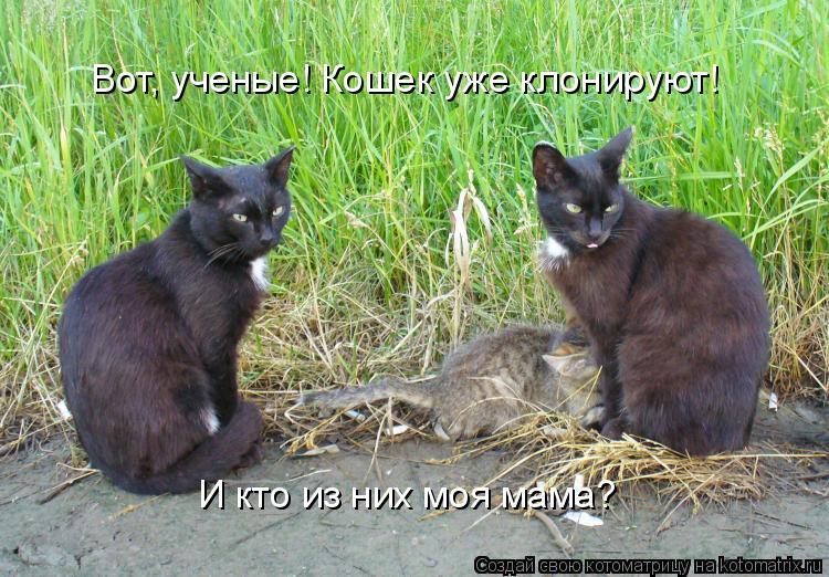 Котоматрица: Вот, ученые! Кошек уже клонируют! И кто из них моя мама?